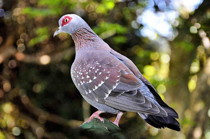 animal-avian-bird-1463294