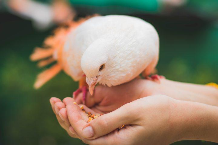 animal-avian-bird-860605