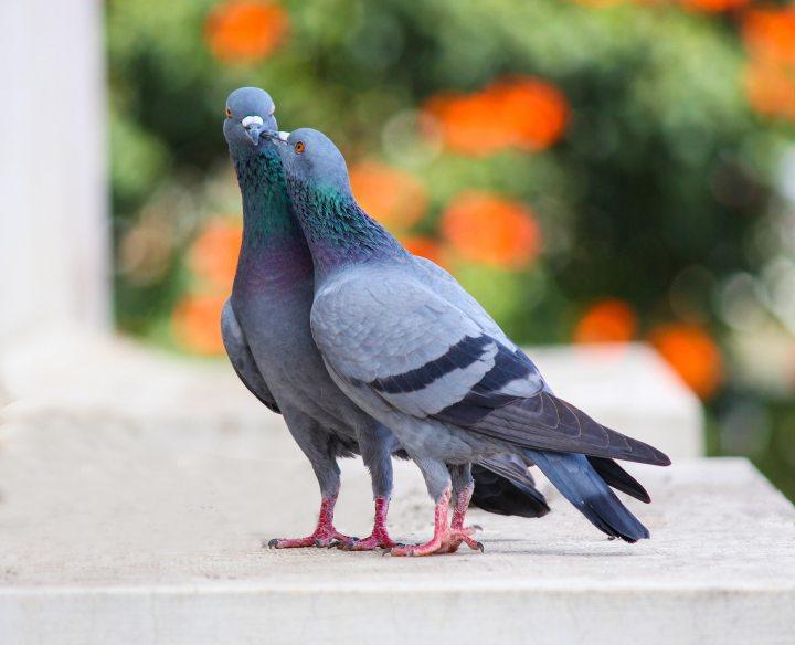 animal-avian-birds-1406506