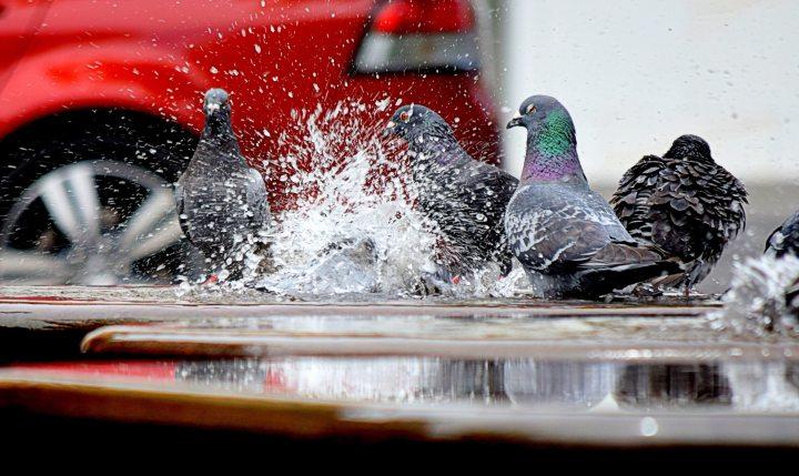 birds-color-fun-166639