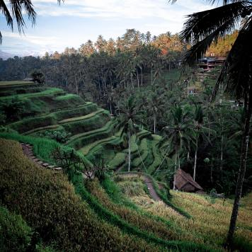 photo-of-rice-terraces-2412711